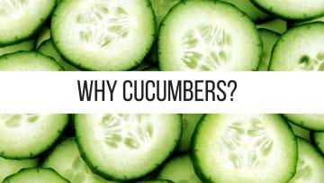 Why Cucumbers?